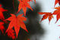 Red Leaves Bar