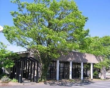 レストラン ぶどうの木