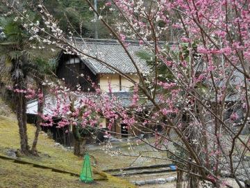 よしの庵(ヨシノアン) - 奈良南部 - 奈良県(そば・うどん)-gooグルメ&料理