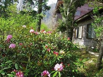 四国山岳植物園 岳人の森 観月茶屋
