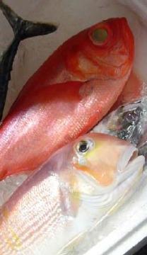 旬菜旬魚 八十八