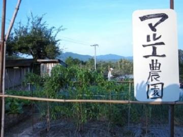 地鶏 専門店 マルエ