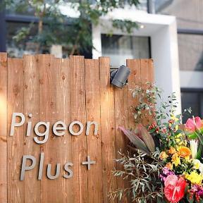 Pigeon Plus+